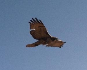 HawkFlyBy