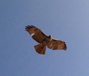 HawkLook